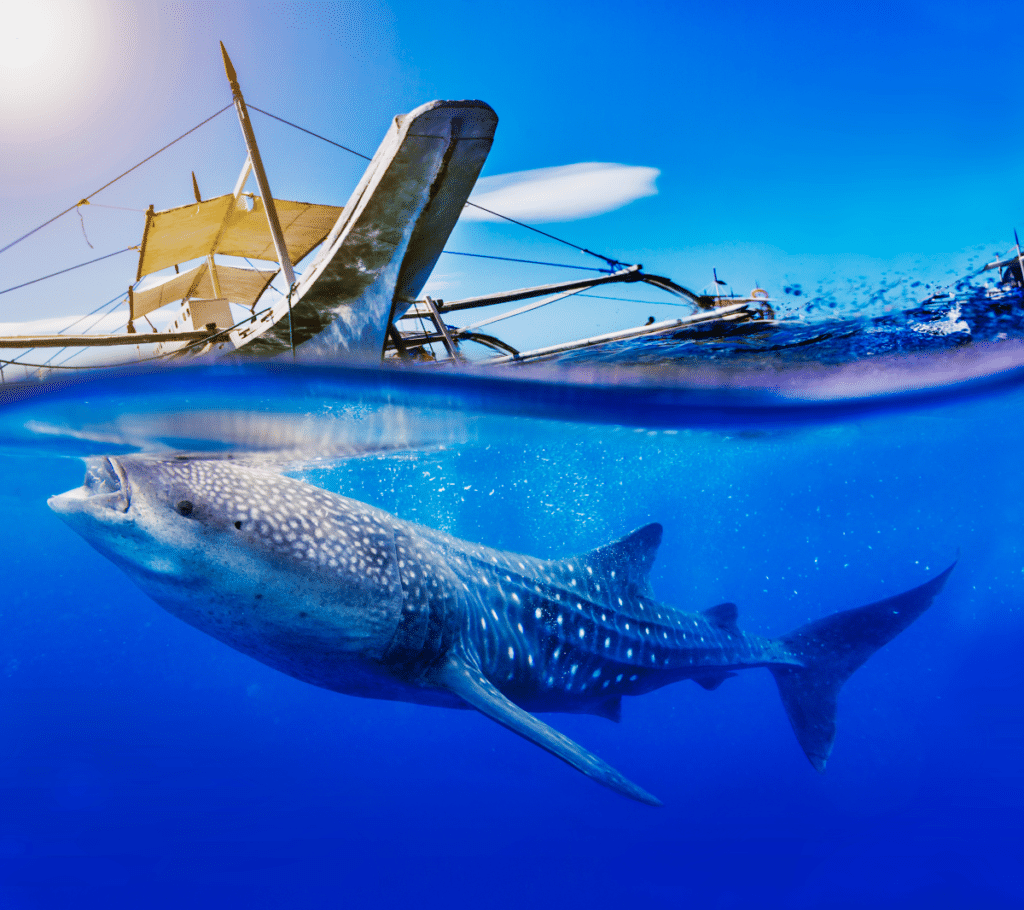 requin baleine oslob avis