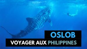Nager avec les requins baleines à Oslob: Mon Avis